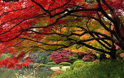 Scarica sfondi autunno, giardino giapponese, tokyo