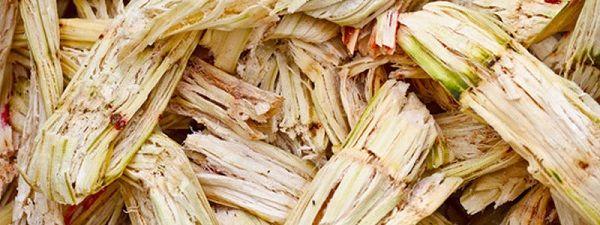 Convierten bagazo de caña de azúcar en plástico biodegradable