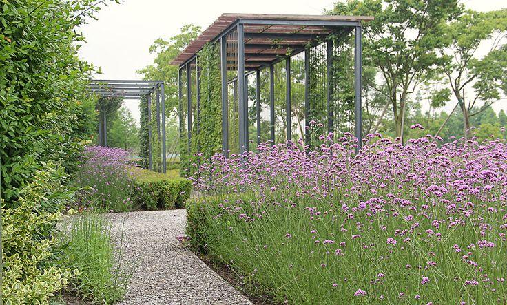 Landscaping With Climbing Plants : Verbena and pergola climbing plants garden ? landscape