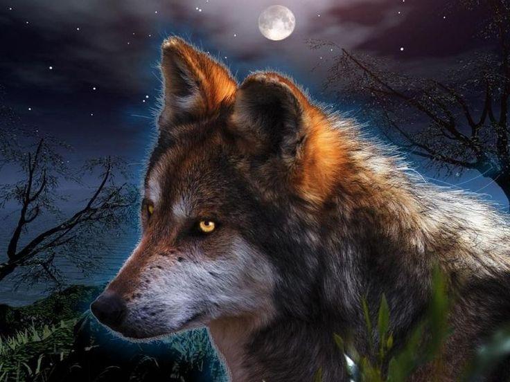 Mejores 15 Imágenes De Lobos En Pinterest
