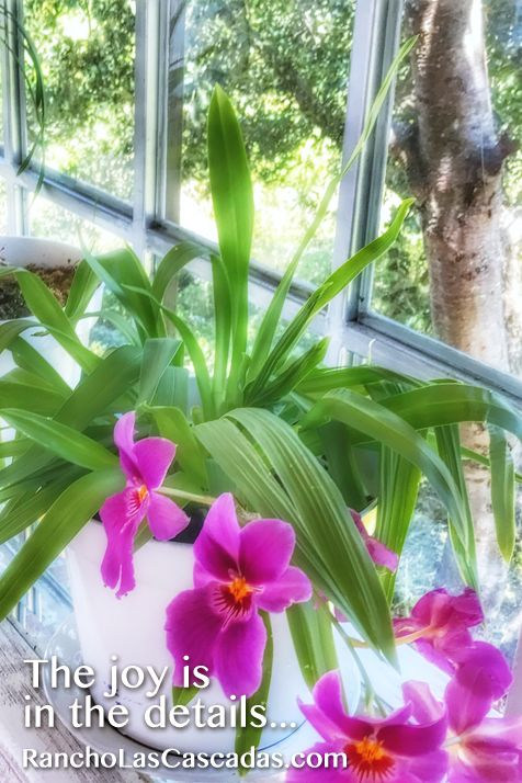 joy in details, orchids, window sill, potted plant, rancho las cascadas