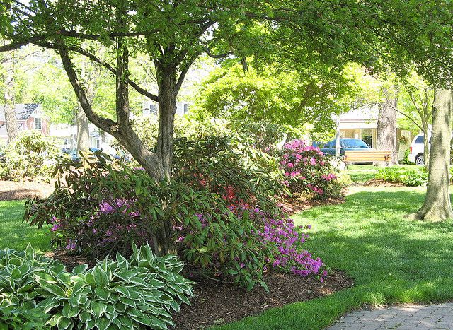 336 best images about landscaping ideas on pinterest for Garden under trees