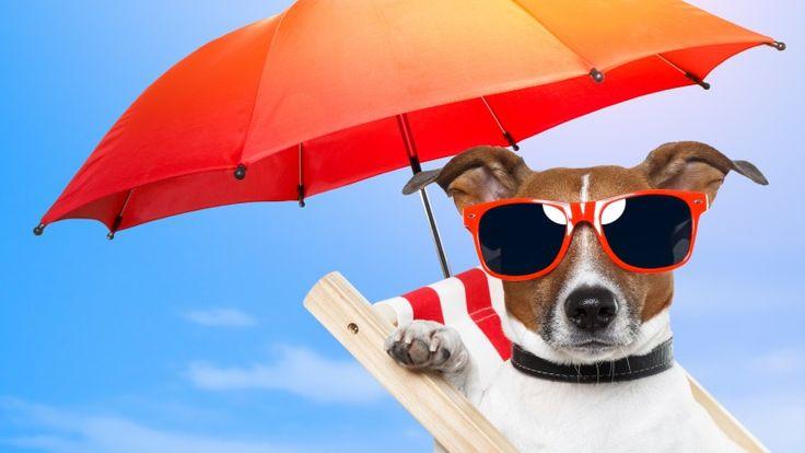 Dog, puppy, sun, summer, beach, sunglasses, umbrella, vacation, animal, pet, sky