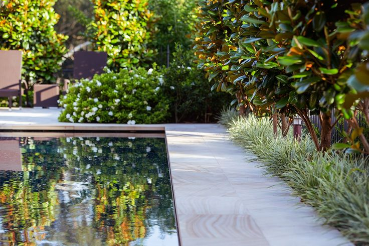 Sandstone flagging frames the pool. Privacy is achieved through boundary planting of magnolia 'Teddy Bear' underplanted with variegated liriope (Liriope jaburan 'Variegata').