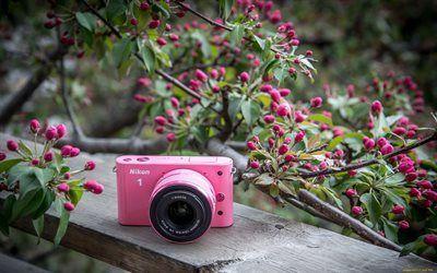 Scarica sfondi rosa fotocamera, giardino, panchina, nikon