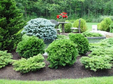 i think this works because the arborvitae balls echo the blue spruce