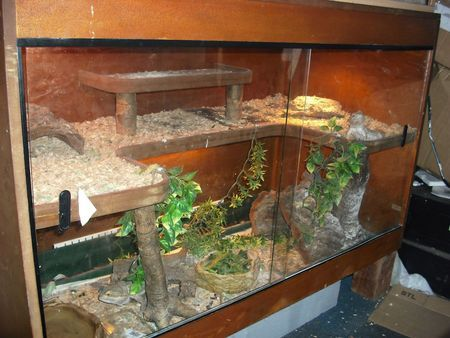 35 Best Images About Reptile Tank Setup Ideas On Pinterest