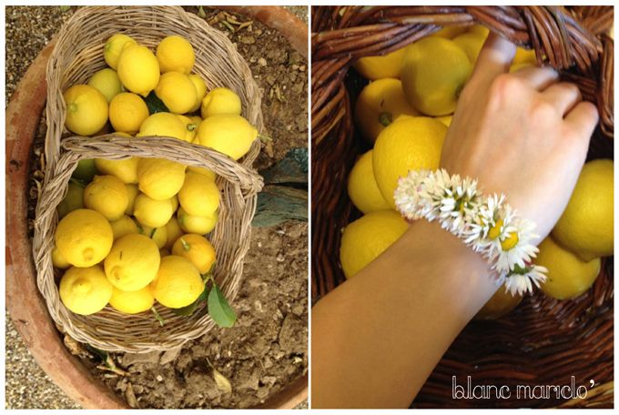 BLANC MARICLO INSPIRING PLACES PUGLIA yellow lemon and wild daisies