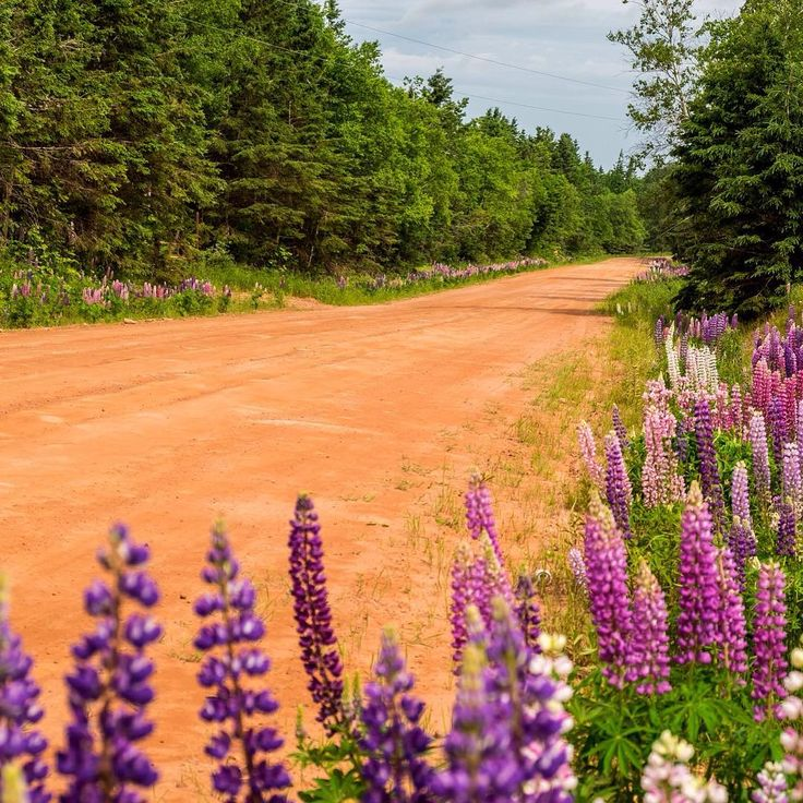 Hit the red dirt road for a photography tour. @wpmaundphotography #peiphotographytour #PEI #truepei #princeedwardisland #peiphotography #peipei #Canada #canada #vacation #vacations #vacationtime #tourismpei #summer