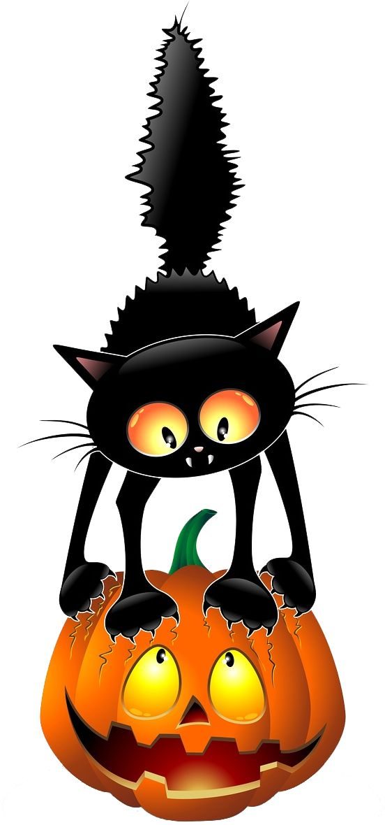 fauna fantasmal cats pinterest halloween