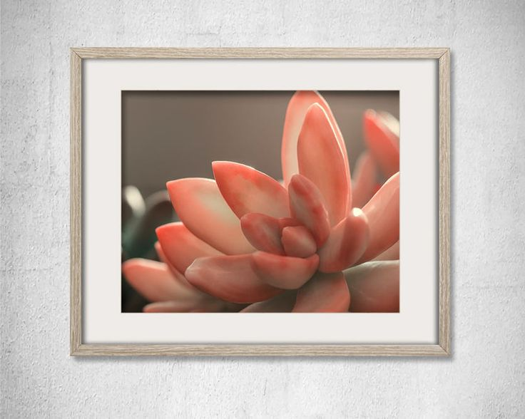Pink Succulent Fine Art Print Pink Cactus Succulent Photography Nature Lover Plants Photo Kichen Gray Decor Mothers day gift Housewarming by LightBluePhotography on Etsy