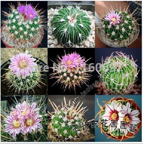 flower pots planters 10seeds of mini cactus plants flowering succulent plants bonsai tree succulent seeds for mini home garden