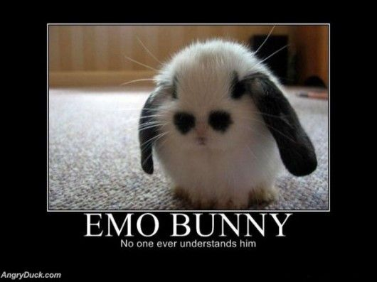 Rabbit, Real Life, Pets, Baby Bunnies, Funny, Adorable, Emo Bunnies, Things, Cutest Animal