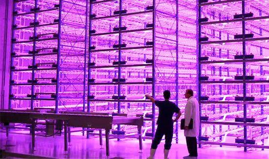 pinkhouse-at-Caliber-Biotherapeutics