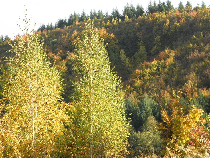 Paduri forestiere pentru bunastarea naturii
