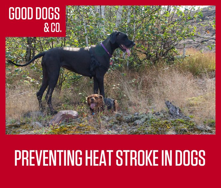 Storing Dog Food In Heat