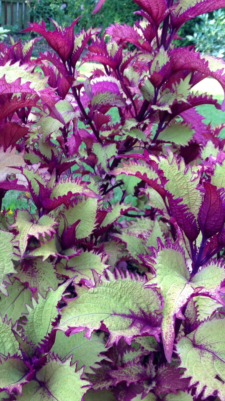 Potted Plants And The Necessary Spring Care: 17 Best Images About Plants