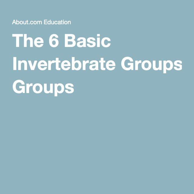 The 6 Basic Invertebrate Groups