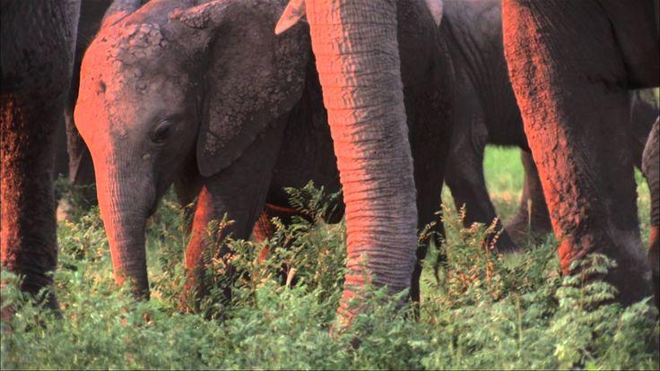Il Delta dell'Okavango, in Botswana Patrimonio UNESCO.