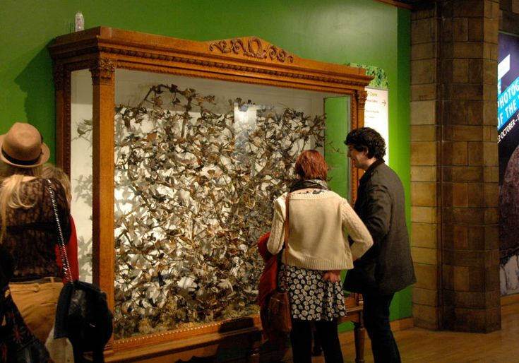 Victorian Natural History Museums and the Display of Knowledge