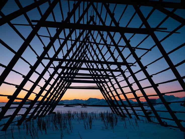 On the Lofoten Islands, fish are hung on hjeller — racks built specifically for air-drying fish in the winter wind. Above, an empty hjell in Henningsvaer, a fishing village. (Photo: Simon Norfolk/Institute, for The New York Times)