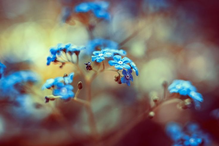 Untitled by Nikoletta Kolozs