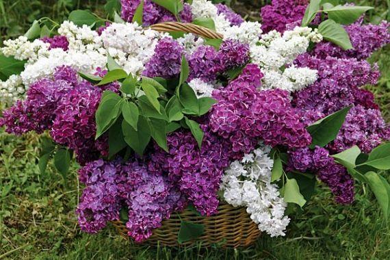 Названия_цветов_цветы_фото_цветов_цветы_фото_фото_цветок_как_сделать_букет_цветков_акробукет