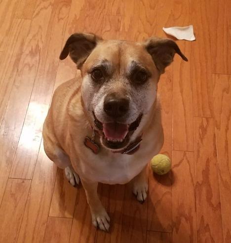 Adorable Lab Mix Dog For Adoption Near Atlanta Ga Adopt Vida Today Pets Dogs Dog Supplies