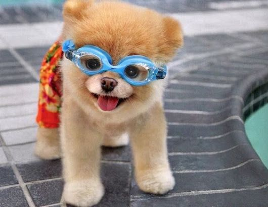 cute pictures,cute puppies,cute animals images,cute animated pics,a cute dog,cute images,cute wallpapers,cute