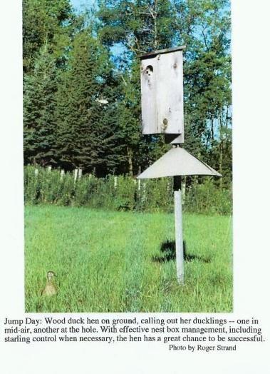 97 best images about hunting on pinterest a deer deer for Duck slide plans