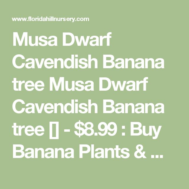 Musa Dwarf Cavendish Banana tree Musa Dwarf Cavendish Banana tree [] - $8.99 : Buy Banana Plants & More Tropical Plants For Sale, Florida Hill Nursery