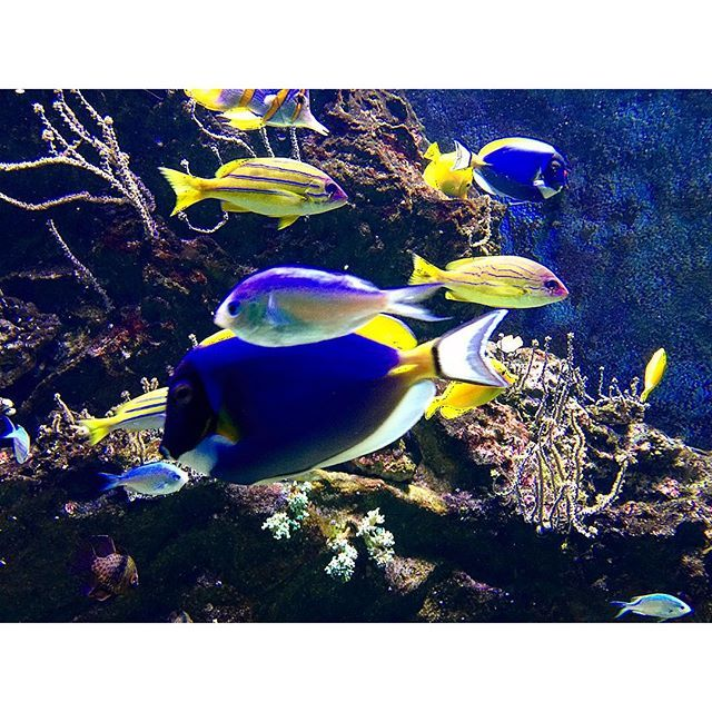 """""Zio perché i pesci sono muti?"". ""Prova tu a parlare con l'acqua in bocca."" #acquariodilivorno"" Photo taken by @sedeluca on Instagram, pinned via the InstaPin iOS App! http://www.instapinapp.com (10/11/2015)"