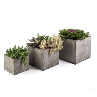 Succulent Garden with Concrete Planter | Overstock.com Shopping - The Best Deals on Silk Plants