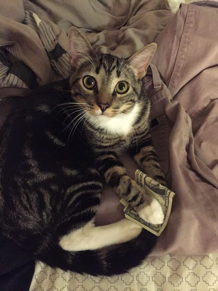 My cat has an obsession with dollar bills and will…