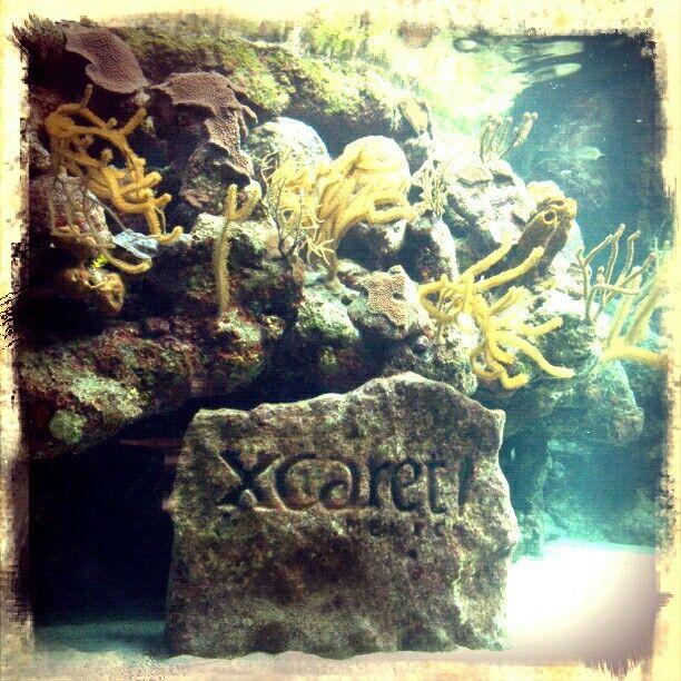 #Xcaret #Aquarium
