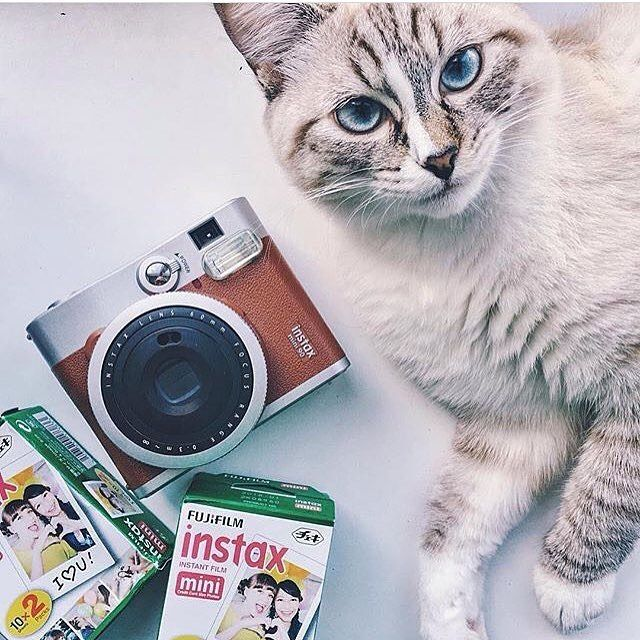 Don't you dare touch my mini 90! #mini90 #brown #instax #instaxclub #fujifilm #cat Photo by : @instaxvn by instaxClub