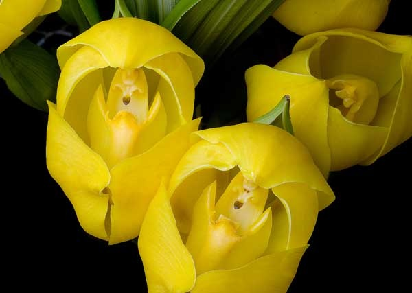 HOA GIEO TỨ TUYỆT - Page 64 C8b924e2a990a8cb5f01c802884de97f--yellow-flowers-exotic-flowers