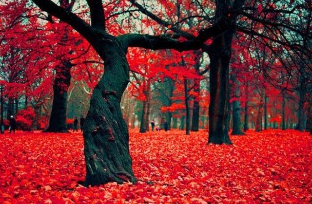 Dark trees on red background. Strikingly beautiful