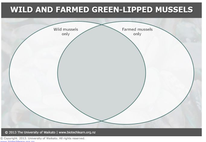 STUDENT ACTIVITY - In this activity, students use a paper-based Venn diagram to illustrate the key similarities and differences between how wild and farmed green-lipped mussels live.  Purpose This activity will help students to explore the life cycle of green-lipped mussels and to research the methods by which they are farmed in New Zealand. It provides the opportunity to use a Venn diagram to organise information graphically.