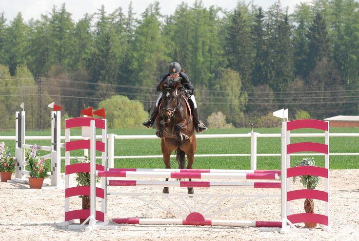 Koně na prodej :: JK Cavalier Rynárec