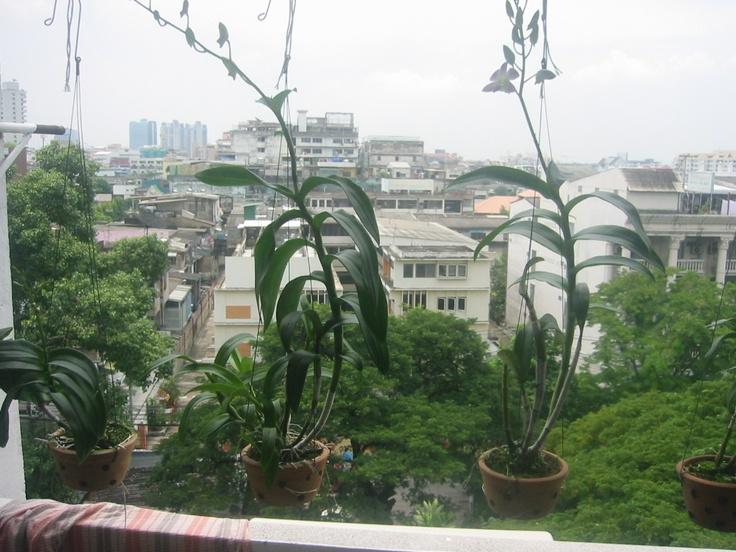 Balcony view from Pitak Court Bangkok