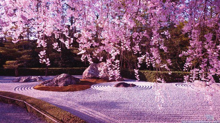 Japanese Cherry Blossom Garden Wallpaperwallpapers Sakura