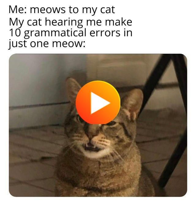 An Xxl Batch Of All The Best Memes Of 2019 According To Reddit Funny Gif Cats Reddit Funny