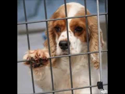 ▶ Holiday Puppies - National Mill Dog Rescue - YouTube Most of the moms and dads of pet store puppies live in USDA licensed commercial breeding kennels. Don't buy a puppy from a pet store or online. Adopt your next family member. Learn more about puppy mill dogs and what you can do to help at our website: http://milldogrescue.org