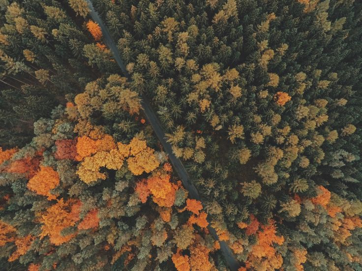 [#HD Wallpaper] #Autumn #Tree The Songs of Trees: Stories from Nature's Great Connectors, Autumn leaf color, #Forest #Nature Leaf, Photograph  - Photo by Jakub Sejkora @jakubsejkora (unsplash)  - Follow #extremegentleman for more pics like this!