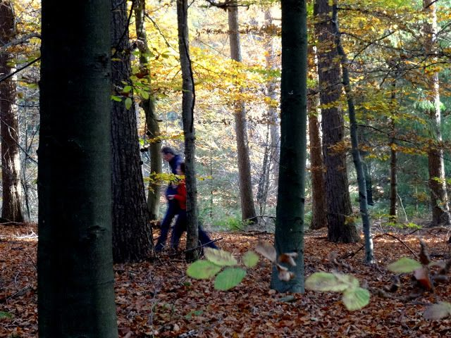 Utrechtse Heuvelrug, Netherlands: An Afternoon in the Woods of Kaapse Bossen