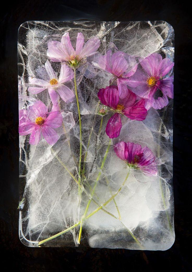 I Take Photos Of Frozen Flowers | Bored Panda