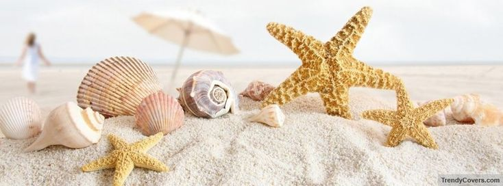Seashells And Starfish Facebook Covers, All New Facebook Cover Photos For Your Timeline #beachpicturesforfacebookcover – Beach Pictures