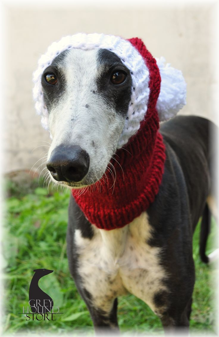 24 best hats images on pinterest lurcher greyhounds and hats material knitting yarn color red white size xl greyhoundgalgolurcher dimensions of the model greyhound in the picture a bankloansurffo Images