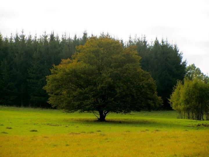 Tree- picture by www.pajta.hu